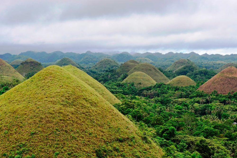 Chocolate Hills turning brown