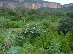 Cal Madow forest, Somalia