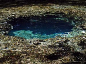 One of the blue holes, the upper Chassahowitzka Springs