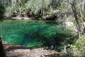 Volusia Blue Spring. The fissure - cave is visible.