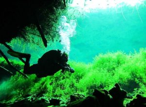 Diving in Naranjal Cenote, part of Sistema Ox Bel Ha