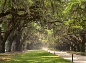 Avenue of Oaks, Boone Hall
