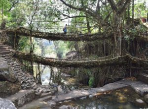 Double decker root bridge near Cherrapunji