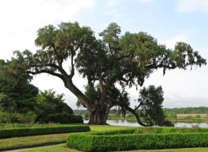Middleton Place Garden