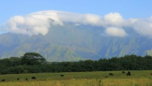 Rare glimpse on Mount Wai'ale'ale. Usually it is densely covered with clouds.