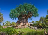 Tree of Life in Walt Disney World Resort