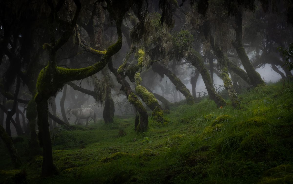The unique Harenna Forest
